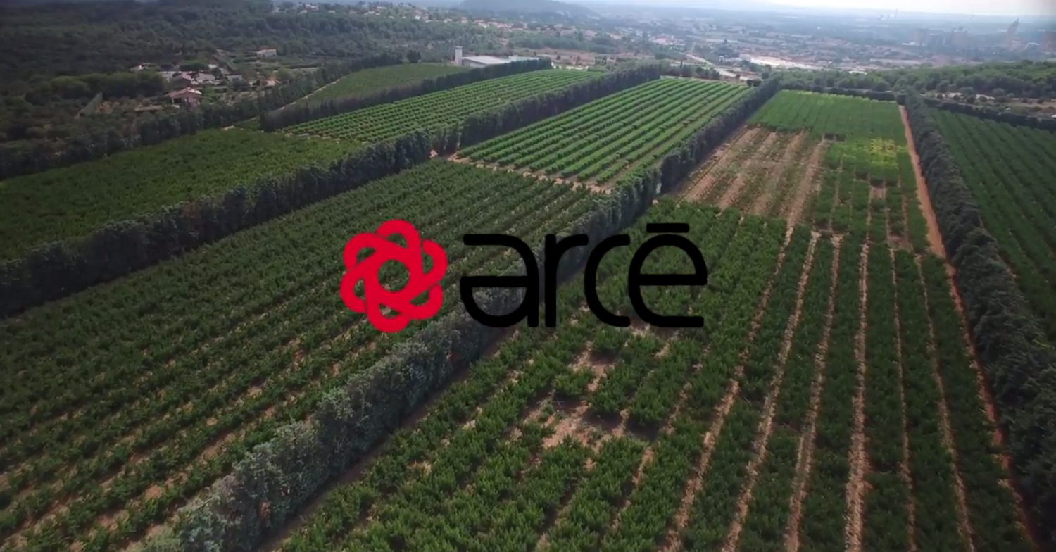 Arce Fruits