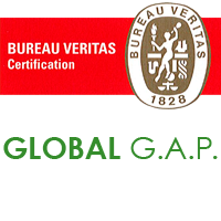 bureau-veritas-global-gap