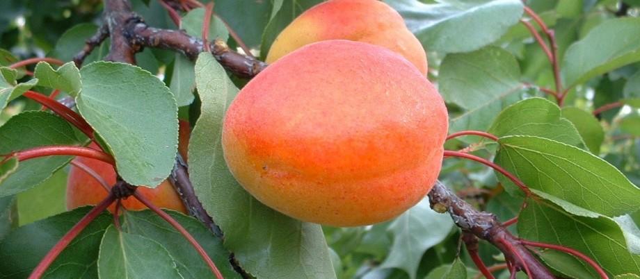 Orangered 2