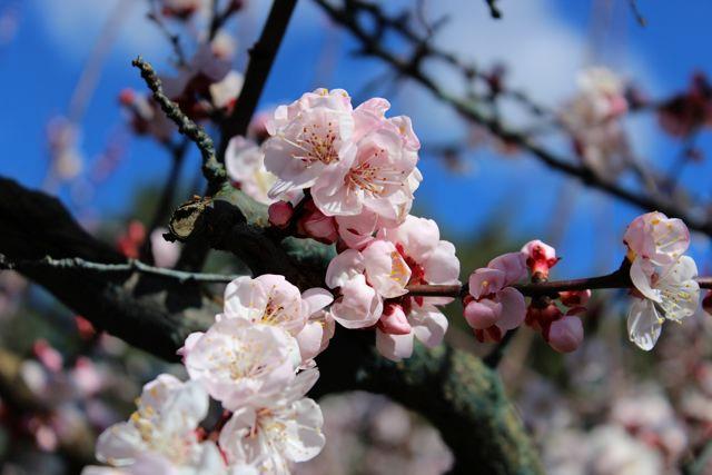 floraison10