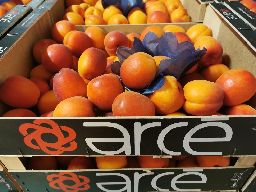 apricots-0