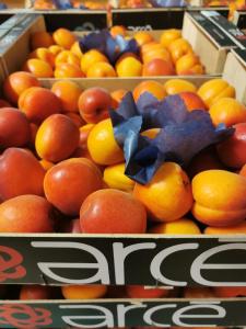 apricots-3