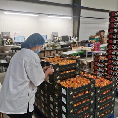 Chloé - à la Normalisation des Abricots.