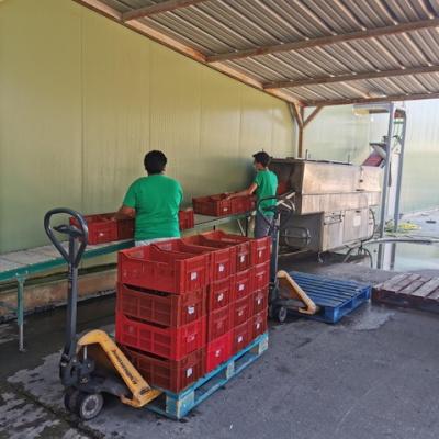 Jheyson et Steven - Ils lavent chacune de nos caisses qui servent à contenir nos fruits Brut de cueille.