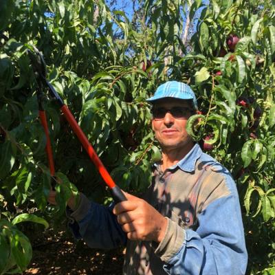 Elias, qui s'occupe de la taille mécanique des arbres.